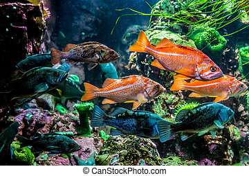 Several Interesting Colorful Grouper-like Fish Underwater.