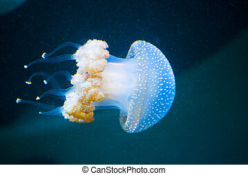 Several jellyfishs moving in water