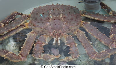 Several large pink crabs are sitting in a tank at the fish market.