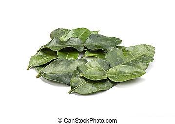 Several lime leaves