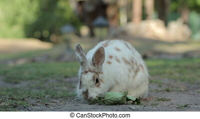 Several Little Rabbits - White spotted with red rabbit eats...