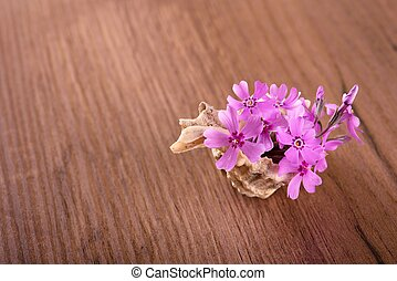 Several pink carnations placed in seashell on wooden board