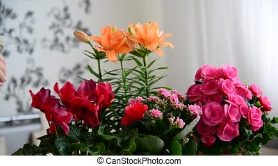 Several potted flowers are on table in the room - Several...