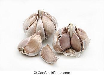 garlic - Several raw garlic