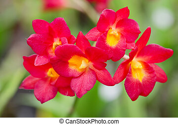 Several red orchid flowers in the garden.