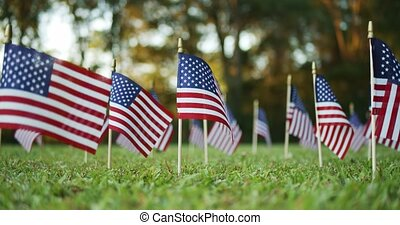 Several small American, US or USA, flags waving in the wind outside in the grass. For Memorial day or Veterans day.