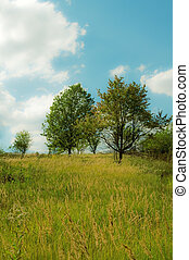 Several trees in a meadow