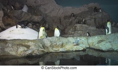 Several Varieties of Penguins in a Mixed Zoo Enclosure -...