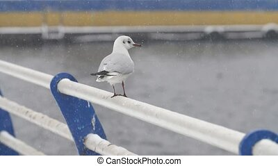 Several white birds landing and taking off on rails on river...
