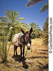 Severe Donkey Life - Donkey resting after a hard work. Dra...
