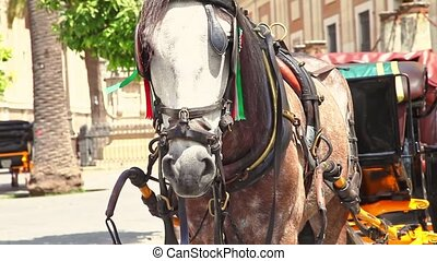 Seville horse carriage rides - Spanish horse parked near ...
