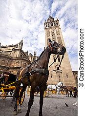 Seville - Tourist horse carriage