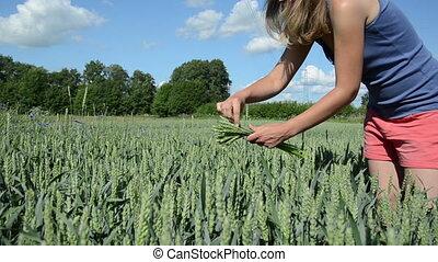sexy girl pick wheat ears