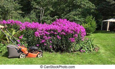 Sexy woman cuts the grass with petrol lawn mower around red flower bed.
