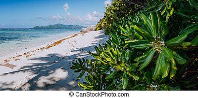 seychelles, la, île, paradis, matin, praslin, source, digue, horizon, d'argent, plage, anse, vue