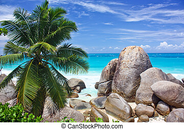 Seychelles seascape with coconut trees