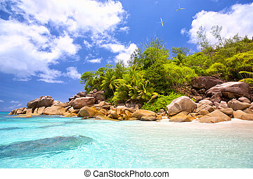 Seychelles tropical beach