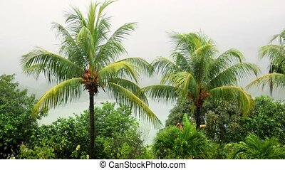 Seychelles, tropical rain at the equator, palm branches in the rain and wind.