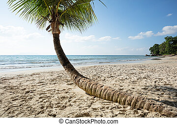 seychelles, wyspa, amant, mahe, baie, vallon