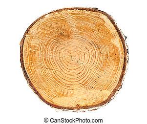 sezione, albero, croce, tronco