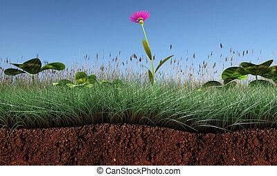 sezione, erba