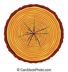 sezione, fine, legname