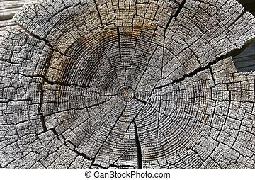 sezione, legno, fondo., croce