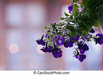 sfocato, sognante, fiore