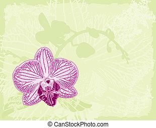 sfondo verde, orchidea