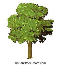 sg171004a-Illustration of Tree - Vector Illustration