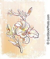 shabby outline Illustration of the white lily