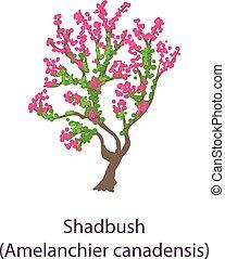 Shadbush icon, flat style - Shadbush icon. Flat illustration...