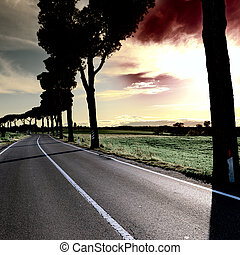 Shade of the Trees on a Paved Road in Tuscany at Sunset, ...