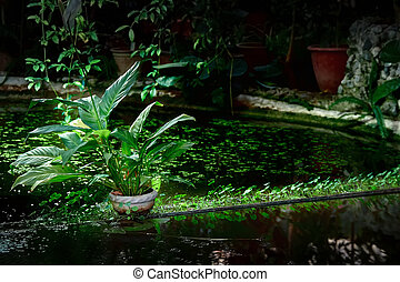 Shaded decorative pond with potted and water plants. Light illuminates plant. Play of light and shadow. Copy space.