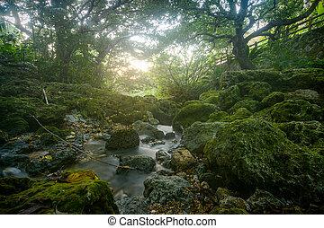 Shaded, mossy banks of the Aja River in Sueyoshi Park, Okinawa, Japan