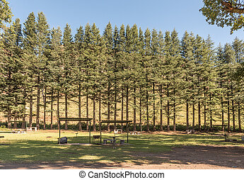 Shaded picnic area at Golden Gate in the Free State