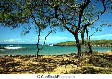 Shaded Tropical Cove - Dixie Maru Cove on the beautiful...