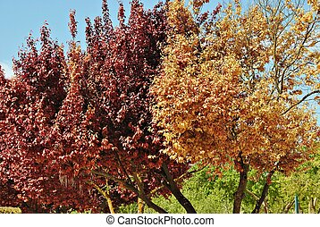 shades of red - Branches of trees with leaves in shades of...