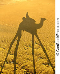Shadow of a camel with tourist on a sand dunes, Thar desert, Ind