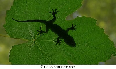 Shadow of a gecko lizard crawling on green leaves 3d...