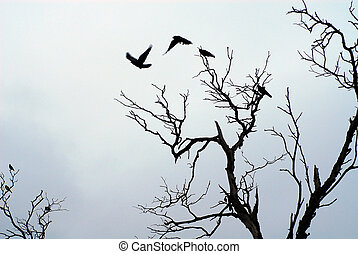 birds flying off dead tree branches showing constract