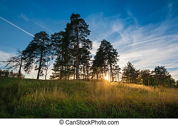 Shadow of pine trees and sunset, West light in the evening.