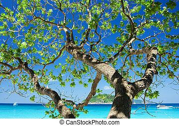Shadow of tree with beautiful sky