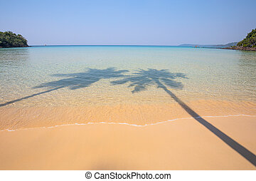 Shadow of two coconut trees on a transparent surface sea water and sandy shore