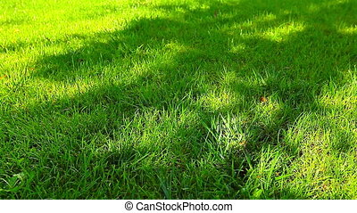 shadow on the green grass