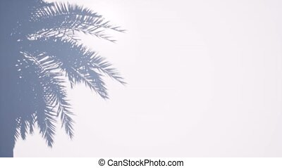 Shadow palm tree Summer tropical leaf. Beautiful light. View...
