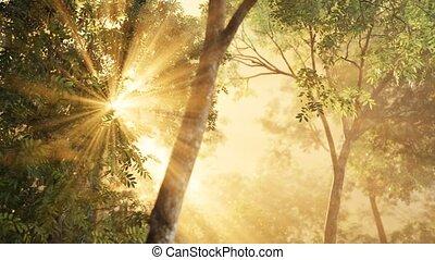 shadows, восход, солнечный лучик, лиственница, лес