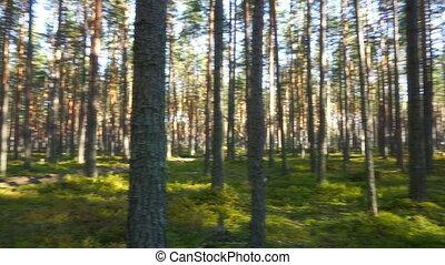 shadows, пейзаж, лес, trees