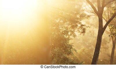 shadows, солнечный лучик, восход, лес, лиственница