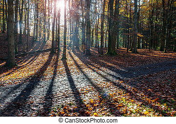 Shadows from trees in a forest in Autumn